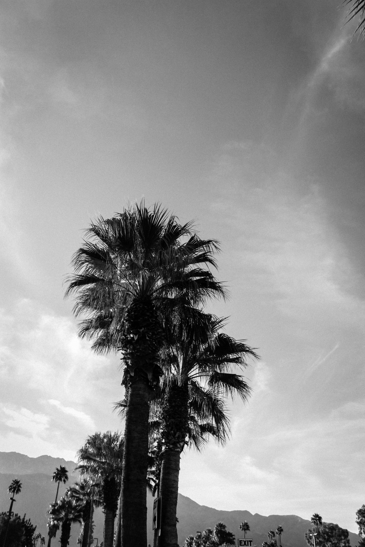 palmspringsblog (57)