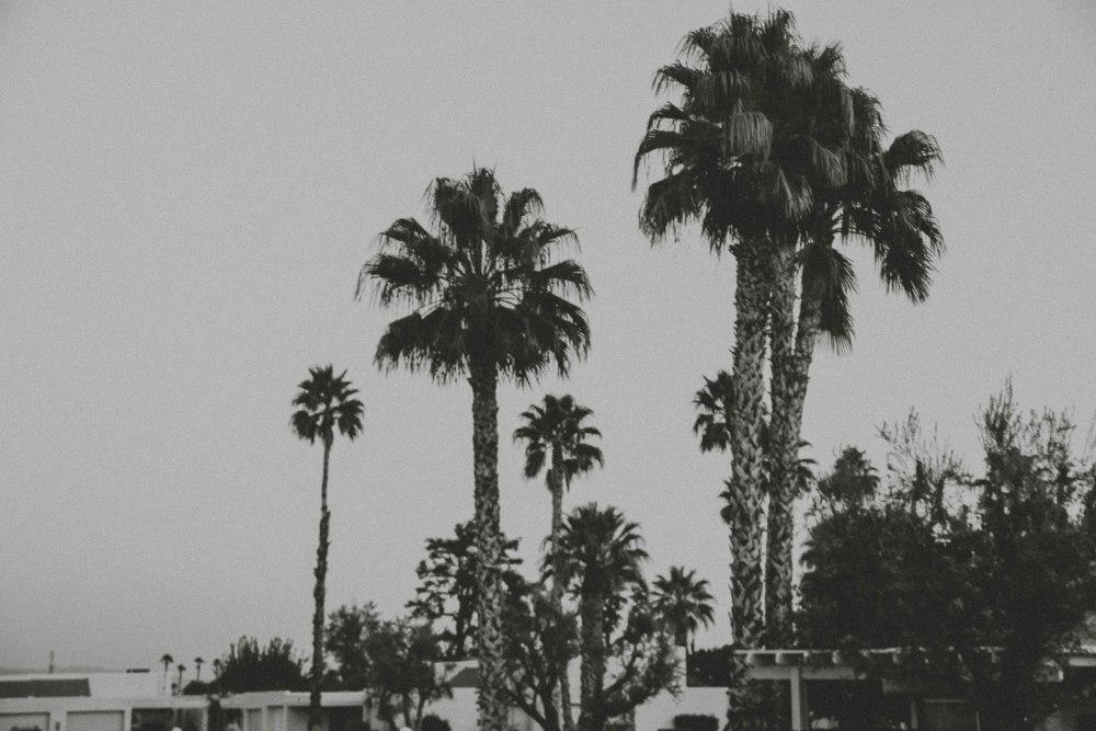 palmspringsblog (78)