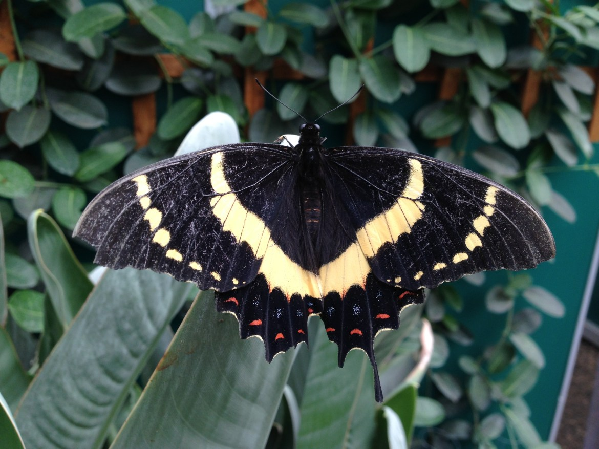 Remembering Who We Are ~ A Butterfly Taster Day Sunday 10th November 10-4pm