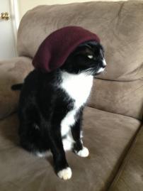Beatnik Cat
