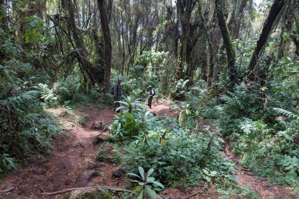 Tracking gorillas in Rwanda!