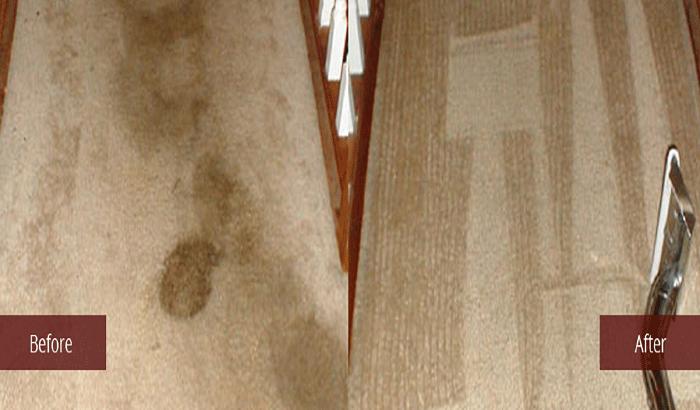 pet_700x410 Pet Spot & Odor Removal Carmel Carpet Cleaners.net