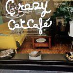 Mi felina visita a un Cat Café en Milan