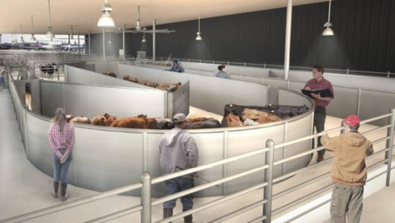A rendering of the livestock handling system, which was designed by Temple Grandin. (Photo: The Ark)