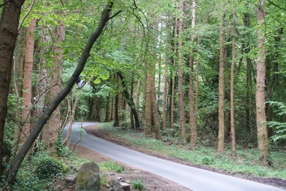 Road to The Lodge at Ashford Castle, Cong, Ireland