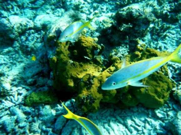Coral Reef in Guardalavaca (Photo Credit: Russell Boate)