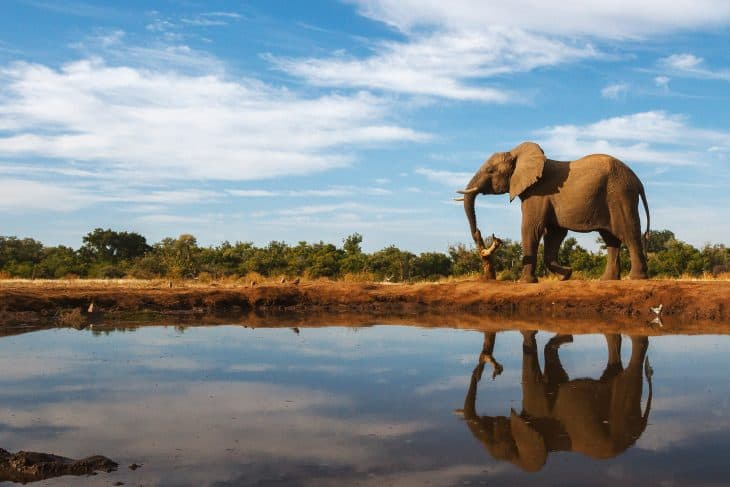 5 Luxury Activities You Didn't Know You Could Do On A Safari