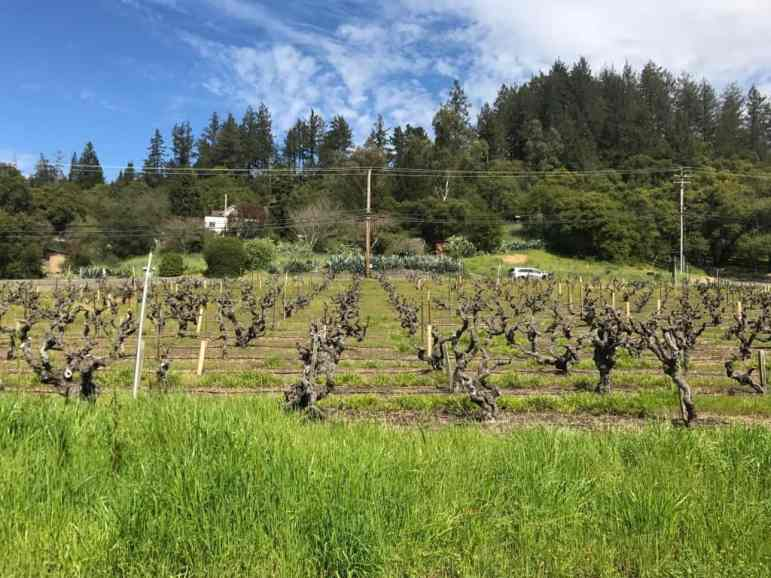 Comstock Wine - Sonoma Country - Image Carmen's Luxury Travel