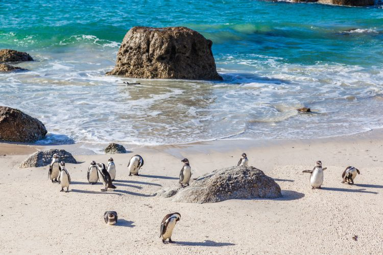 What To See in South Africa – Highlights of Cape Town