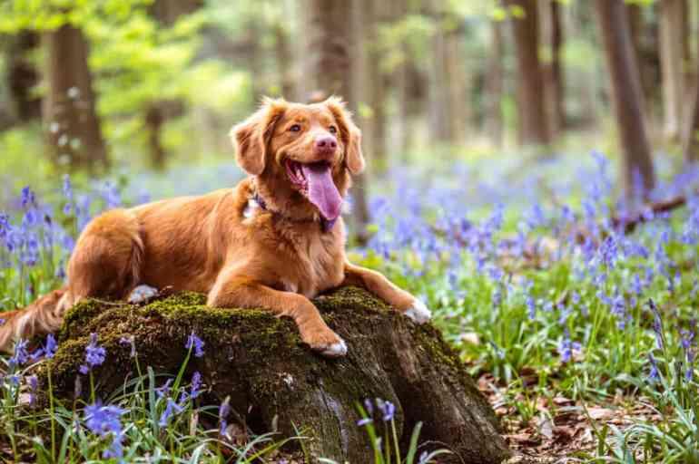 Must-Visit Pet-Friendly Destinations in the U.S.