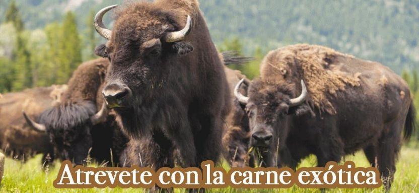 Compra venta de carne exótica de búfalo.