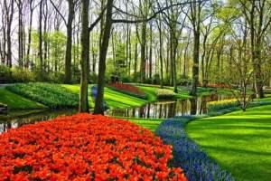 printemps-fleur-soleil