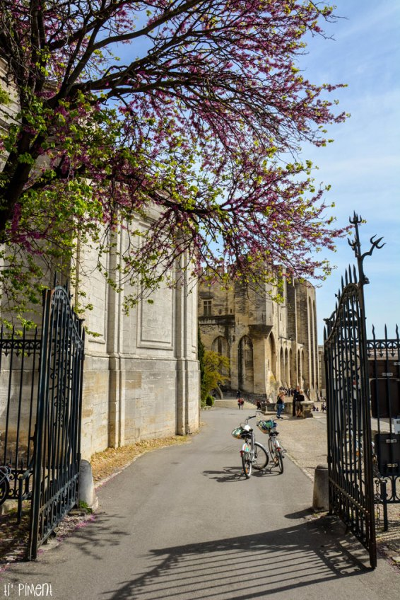 Petite balade en vélo autour du jardin
