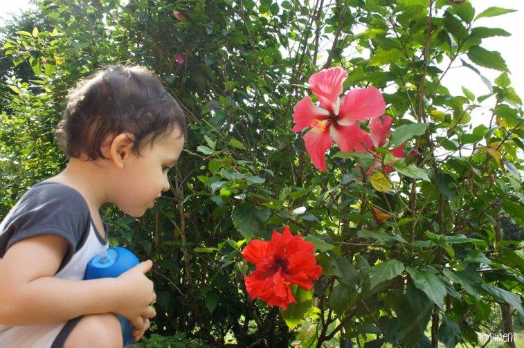 Loulou découvre les fleurs au Parc d'Emeraude