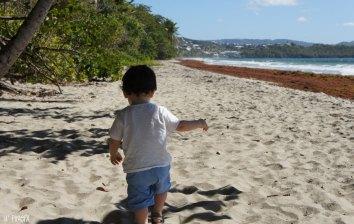 Loulou à la plage du Diamant