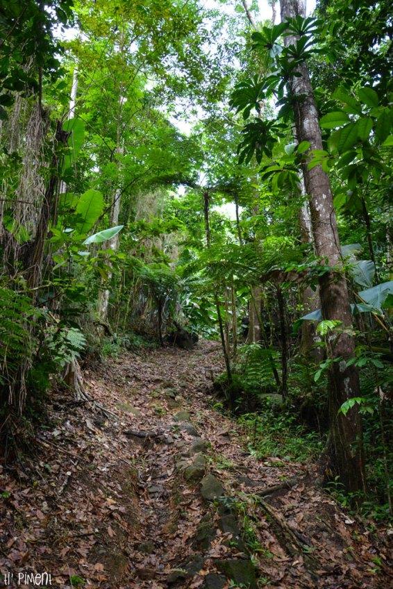 En plein coeur de la forêt tropicale