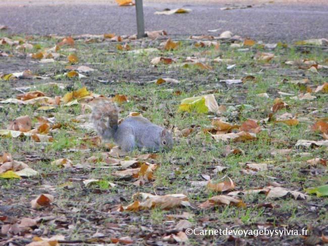 St James's Park pour voir les écureuils