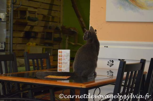 Bar à chat à Budapest