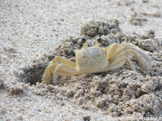 Martinique crabes
