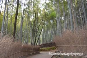 La forêt de bambous à Arashiyama