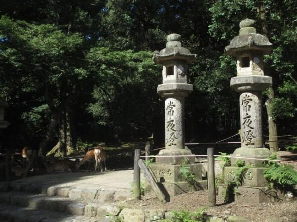 lanternes parc de Nara