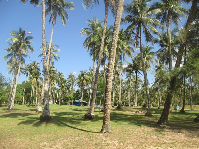 cocoteraie plage Ong Lang Phu Quoc