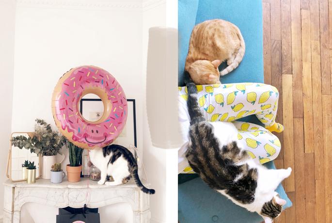 Vivre avec des chats en appartement
