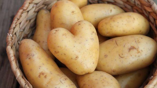 pommes de terre primeur alsace