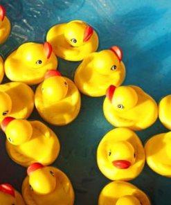 Ducks, Fish & Frogs