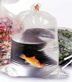 Plastic Fish Bags