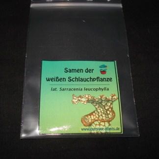 Sarracenia leucophylla Samen