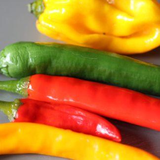 Chili- und Peperoni Samen