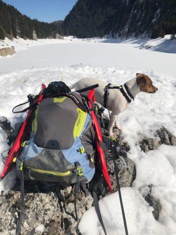 faire de la rando avec son chien