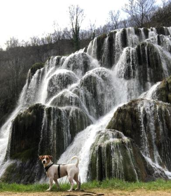 Casacdes Tufs Hérisson chien (19)