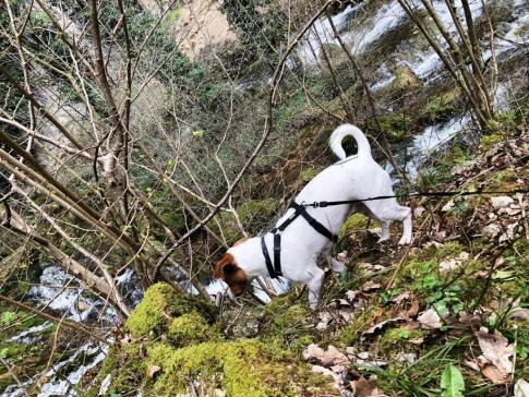 Casacdes Tufs Hérisson chien (8)