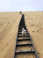 Dune Pilat avec son chien (8)