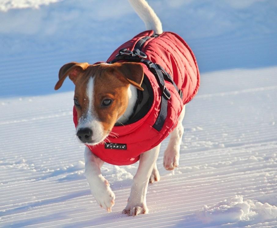protéger ton chien en hiver.