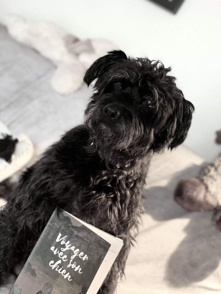 livre voyager avec son chien
