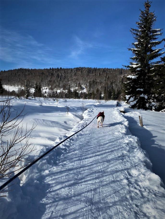 Les Rousses avec un chien voyager (4)