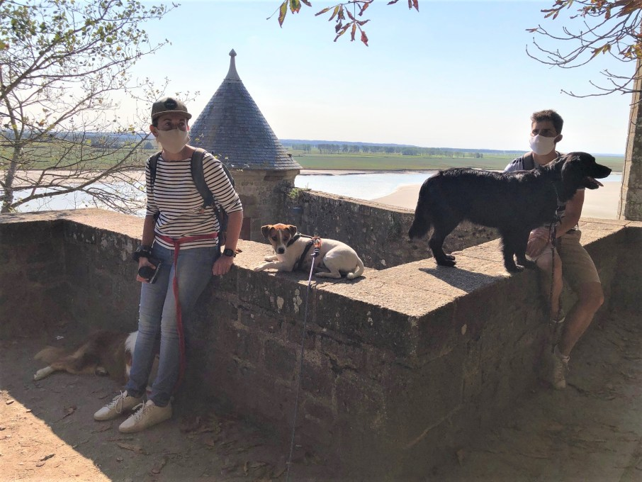 Mont Saint Michel chien dog
