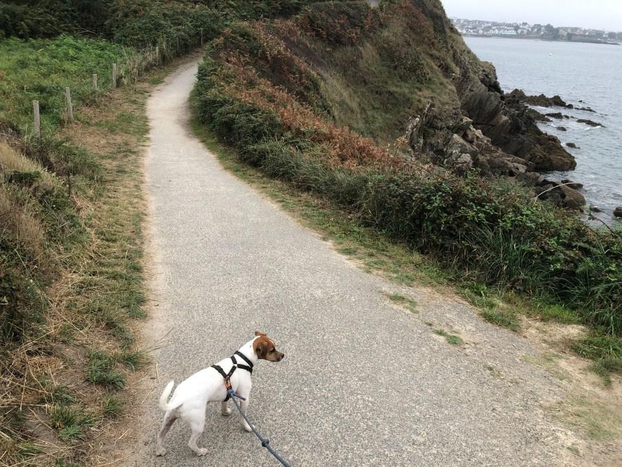 GR34 Bretagne avec chien