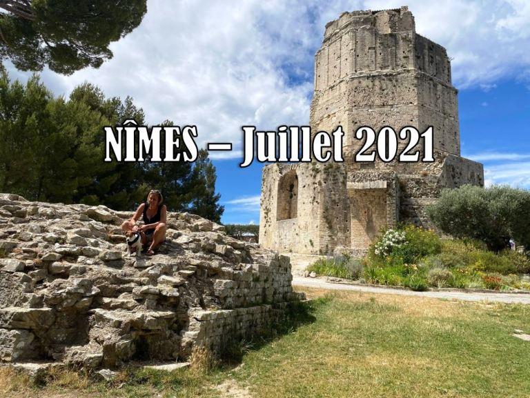 Voyager avec son chien à Nîmes