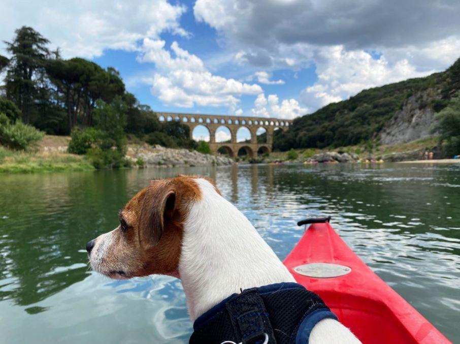 le Pont du Gard avec son chien