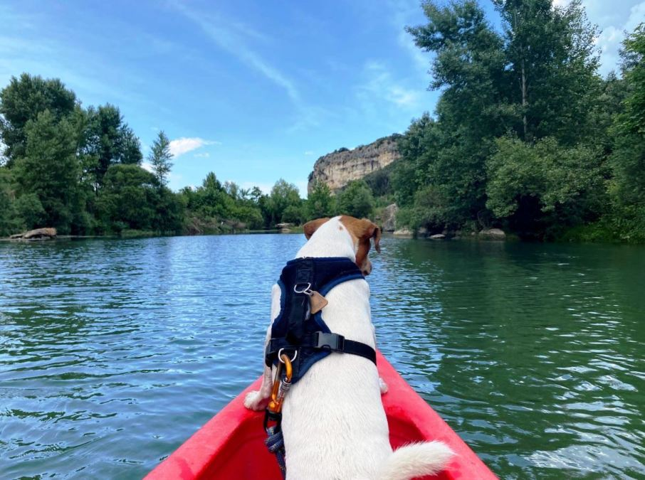 le Pont du Gard, en Canoë, avec son chien !