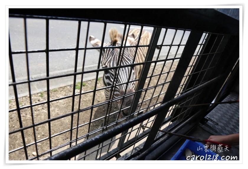 九州親子自由行,九州,九州親子自由行,北九州親子自由行,九州自然動物園,九州自然野生動物園,九州親子景點