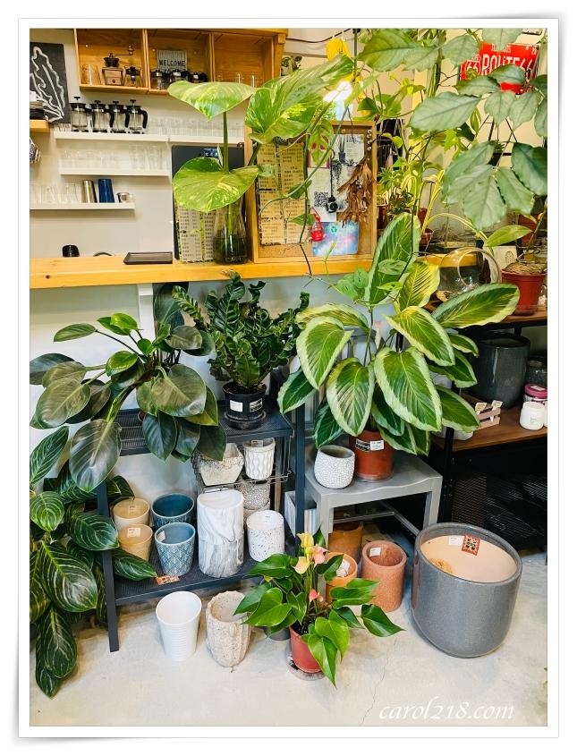 右之界,新社,台中新社,新社咖啡店,觀葉植物,植物咖啡店