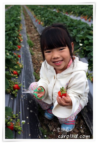 大湖採草莓,小邦,山雲與藍天,採草莓,苗栗,苗栗大湖,苗栗親子遊,豐香草莓,郁盈草莓園,馬拉邦山,馬拉邦山草莓 @山。雲與藍天