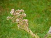 Blüten aus dem Steingarten