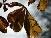 Herbst in Münsingen (c) Carola Peters