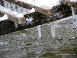 Brunnen-Eis (c) Carola Peters